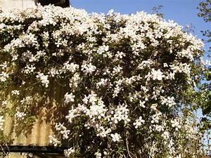 Sichtschutz Garten 2 Meter Hoch : gesucht schnellwachsende pflanzen samen als sichtschutz fragen zu bambus g nstige ~ Bigdaddyawards.com Haus und Dekorationen