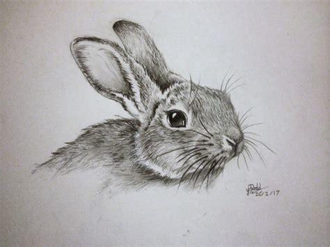 Rabbit Drawing Pencil Sketch Of A Rabbit Drawing Of A Rabbit Drawing