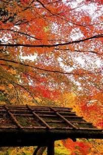 Autumn Kyoto Japan