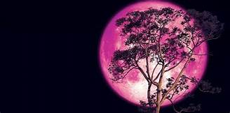 Don't Miss Out: Strawberry Moon Eclipse On June 5, 2020 Th?id=OIP
