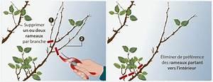 Comment Tailler Un Abricotier : tailler un abricotier verger ~ Melissatoandfro.com Idées de Décoration