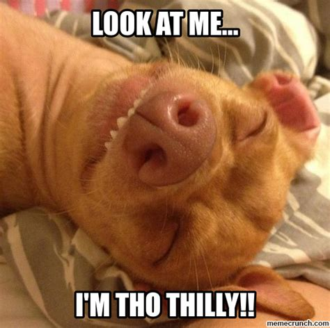 Tuna Meme - tuna the chiweenie meme