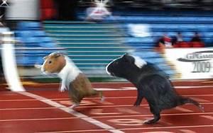 Volunteer Signup Form Hotfoot Hamster Aravaipa Running