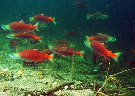 British Columbia: Diving Canada's Freshwater Interior   X ...