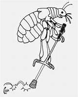 Flea Drawing Wonders Weekend Bites Beaver Colganology Fleas Getdrawings Largest Mountain sketch template