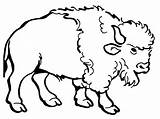 Bison Coloring Drawing Buffalo American Clipart Cartoon Clip Water Pages Awesome Cliparts Nice Colorluna Printable Drawings Getcolorings Indian Native Getdrawings sketch template