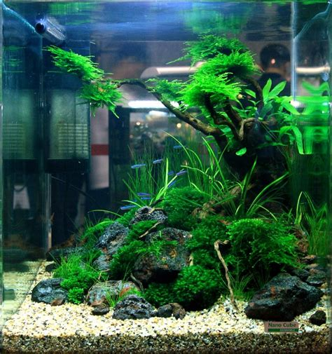 Cube Aquarium Aquascape by What To Do With A Cube Aquascaping World Forum