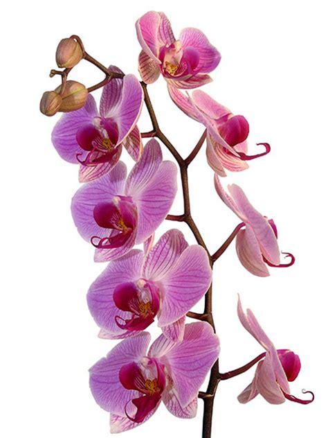 livraison de fleurs au bureau 28 images fleurs deuil eglise ambleon fleurs deuil livraison