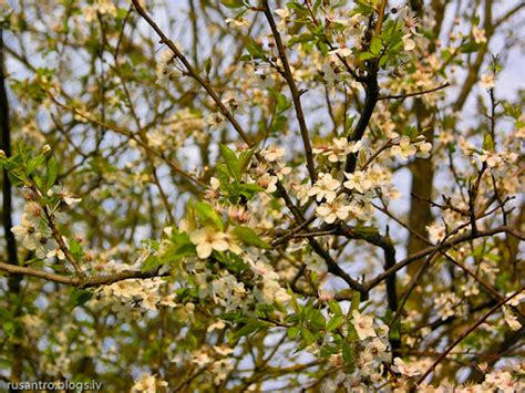 Pavasaris (foto)