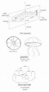 Sponge Sea Drawing Draw Fish Label Paintingvalley Jellyfish Drawings sketch template