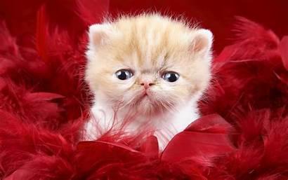 Funny Wallpapers Cats Cat Animals Animal Desktop