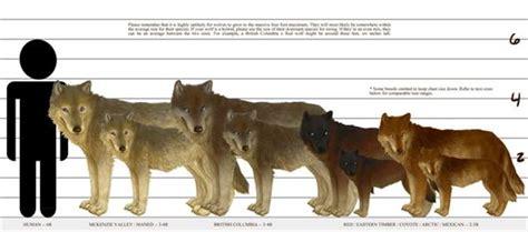 arizona hybrid association charts  wolfdog comparison