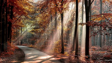 nature landscape trees forest branch sun rays road
