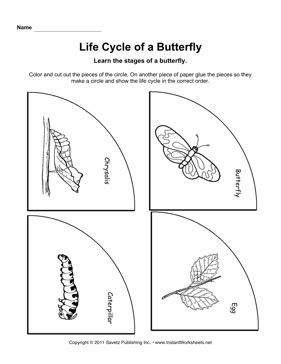 cycle butterfly 912 | Life Cycle Butterfly