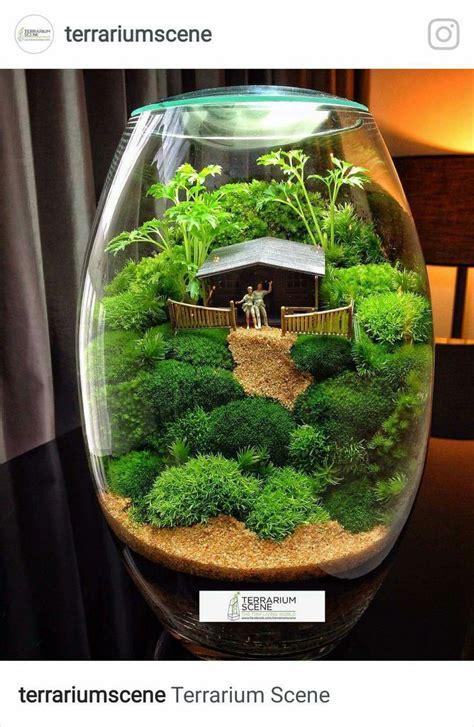 where can i buy moss for a terrarium 650 best terrariums and miniature gardening images on pinterest garden terrarium green houses
