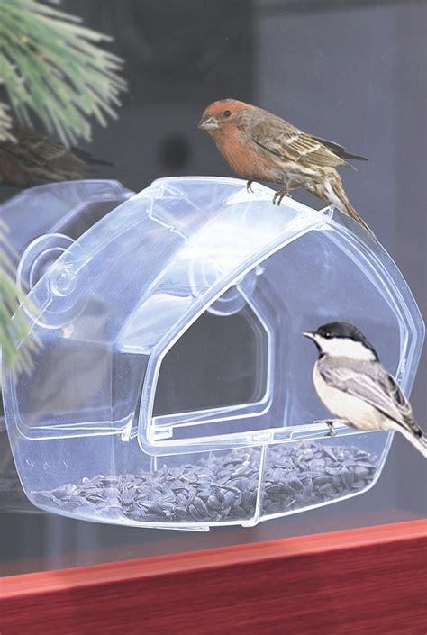 window bird feeder bird feeders n more window bird feeders
