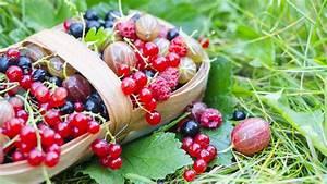 Erdbeeren Pflegen Schneiden : beerenstr ucher pflanzen pflegen und schneiden ~ Lizthompson.info Haus und Dekorationen