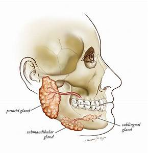 Department Of Otolaryngology  U0026gt  Patient Care  U0026gt  General Otolaryngology  U0026gt  Salivary Gland Disorders