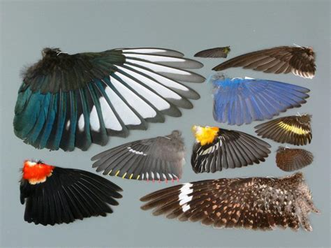 17 best images about wing 17 best images about animals pelts on museums