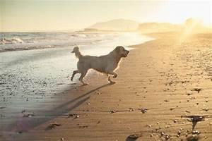 Beste Campingplätze Spanien : urlaub mit hund in spanien hunde ~ Frokenaadalensverden.com Haus und Dekorationen