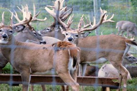 Chronic Wasting Disease In
