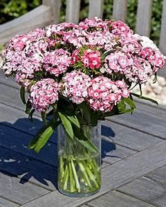 Oeillet De Poete : graines de fleurs oeillet de poete dianthus barbatus ~ Melissatoandfro.com Idées de Décoration