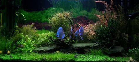 aquarium amazonia 360l par flintstones