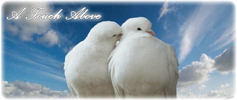 Florida White Dove Releases