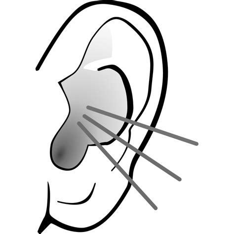 ear clipart clipartioncom
