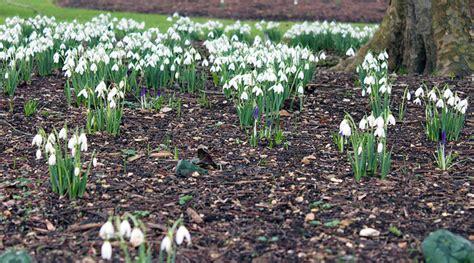 bulb planting tips tim austen garden designs