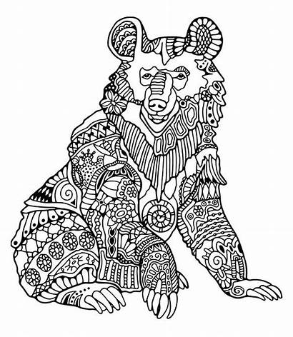 Coloring Bear Ours Bears Coloriage Colorare Disegni