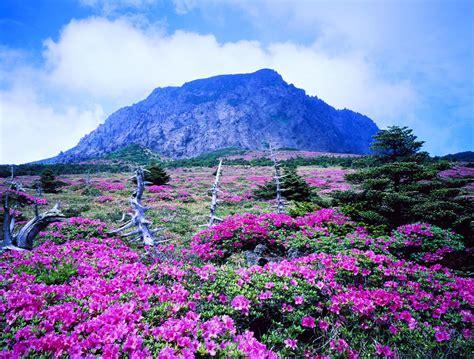 full picture jeju island south korea