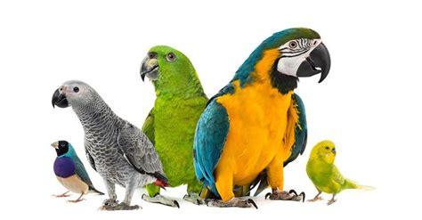 Best Toys For Parrotlets