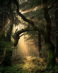 Forest Landscape Photography