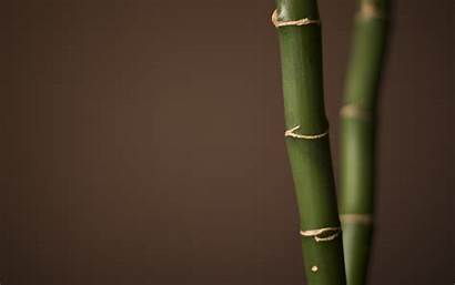 Simple Wallpapers Desktop Teamwork Background Bamboo Px
