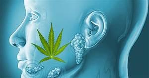 How Long Does Marijuana Stay In Saliva