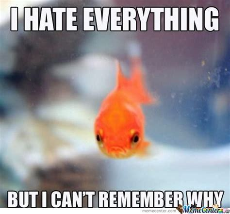 Fish Memes - fish memes best collection of funny fish pictures