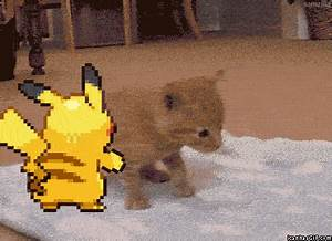 Image - Funny-gif-Pikachu-pushing-cat-kitten.gif - The ...