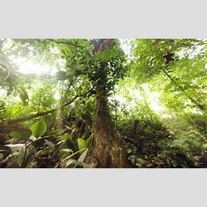 Immerse Yourself In The Jungle With A Wild 360degree