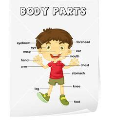 science worksheets preschool worksheets body parts