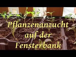 Aussaat Auf Der Fensterbank : pflanzen anzucht auf der fensterbank mit bio saatgut youtube ~ Whattoseeinmadrid.com Haus und Dekorationen