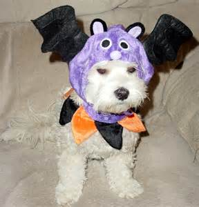 Cute Small Dog Halloween Costumes