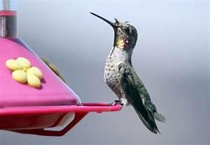 Parts Of A Hummingbird