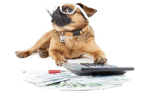 bureau sécurité transport est 39 il possible d 39 emmener chien sur lieu de travail