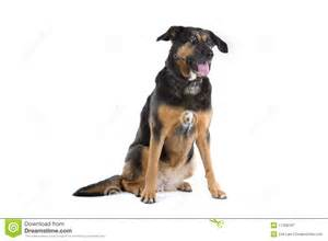 Cute Mixed Breed Dogs