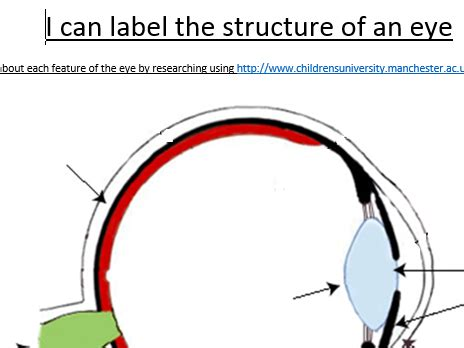 label the eye by rachelwelch teaching resources