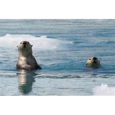 Prince William Sound Surprise Glacier Cruise - Major