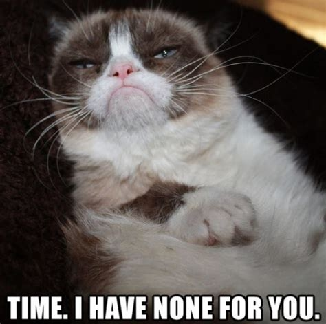 Create A Grumpy Cat Meme - 1383 best images about grumpy cat on pinterest gift quotes angry cat and cats