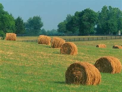 Kentucky Summer Harvest Landscapes Scenic Nature Farm