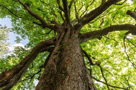 Tree Of Images Il 21 Novembre 232 La Giornata Nazionale Degli Alberi Lifegate